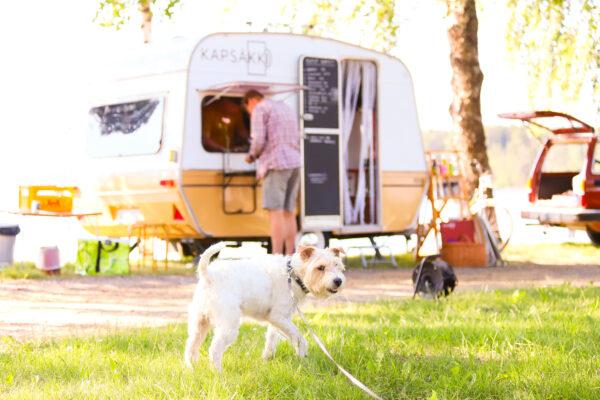 Valkoinen terrieri seisoo kahvila Kapsäkin asuntovaunun edessä